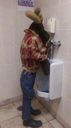 Un animal dans certains toilettes des Chutes du Niagara se tient près de vous photo blog voyage tour du monde https://yoytourdumonde.fr