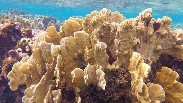 Près de la ville de Matanzas à Cuba et à 2h de La Havane se trouve des coraux magnifiques! Vous pouvez faire du snorkeling sans probleme photo blog voyage tour du monde https://yoytourdumonde.fr