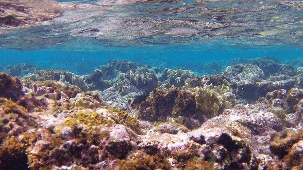 Snorkeling à Matanzas à Cuba photo blog voyage tour du monde https://yoytourdumonde.fr