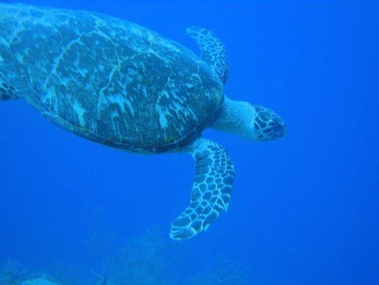 Plongée sur l'ile d'Utila est examen open water photo blog voyage tour du monde travel https://yoytourdumonde.fr