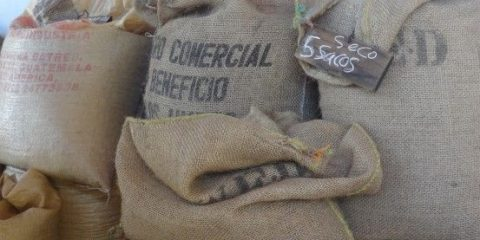 guatemala-cafe-nespresso-voyage-travel