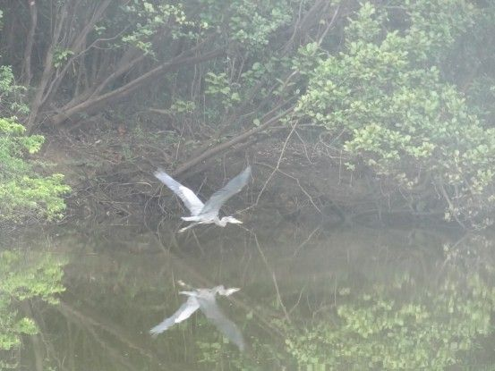 Oiseau sur le rio pasión entre Sayaxché et Aguateca photo blog voyage tour du monde travel https://yoytourdumonde.fr