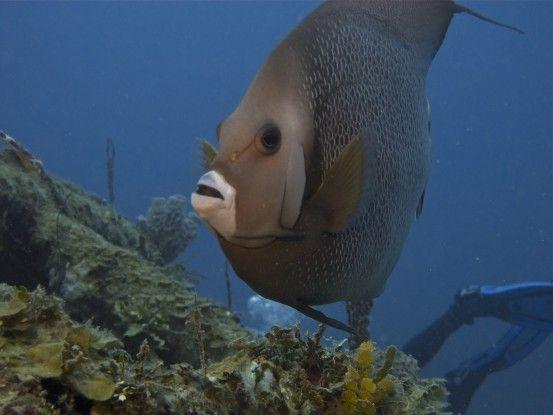 Examen et certification Open Water coraux et poissons Ile Utila au Honduras photos blog voyage tour du monde travel https://yoytourdumonde.fr