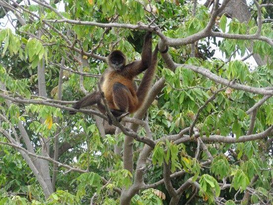 'une des iles abritent de nombreux singles qui vivent en liberté sur le Lac Nicaragua photo blog voyage tour du monde travel https://yoytourdumonde.fr