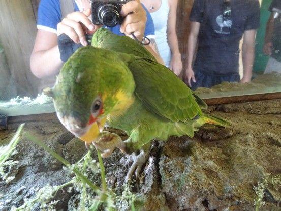 Volcan Mombacho au Nicaragua photo blog voyage tour du monde travel https://yoytourdumonde.fr