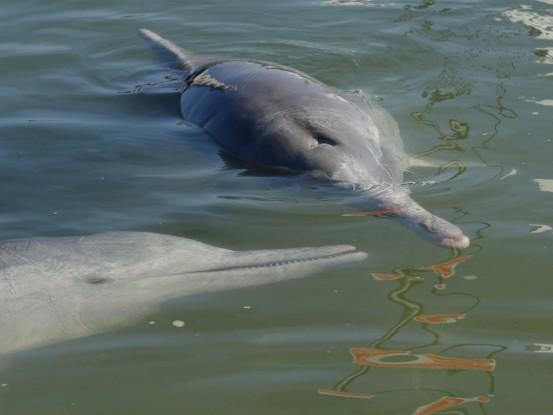 Australie-Queensland; Tin Can Bay