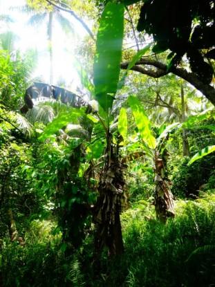 nouvelle-caledonie-jungle-saint-denis-balade