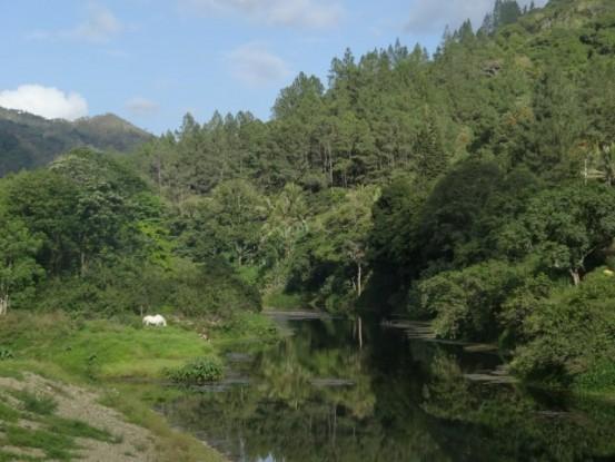 Nouvelle-Caledonie: Sur le chemin paysage magnifique.