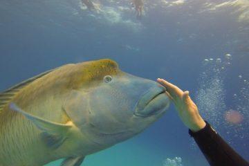 australie-barriere-corail-queensland