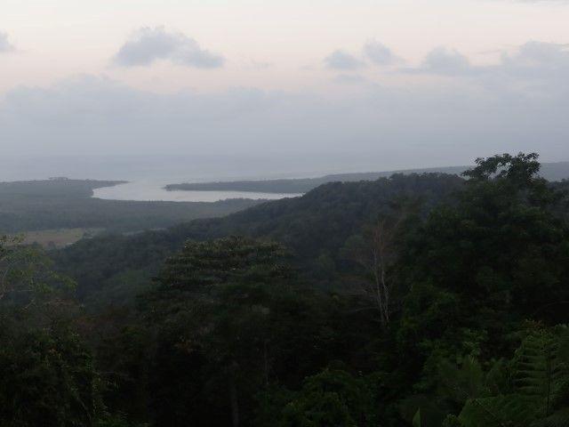 Australie- Queensland: Cap Tribulation: Fin de journée dans le parc.