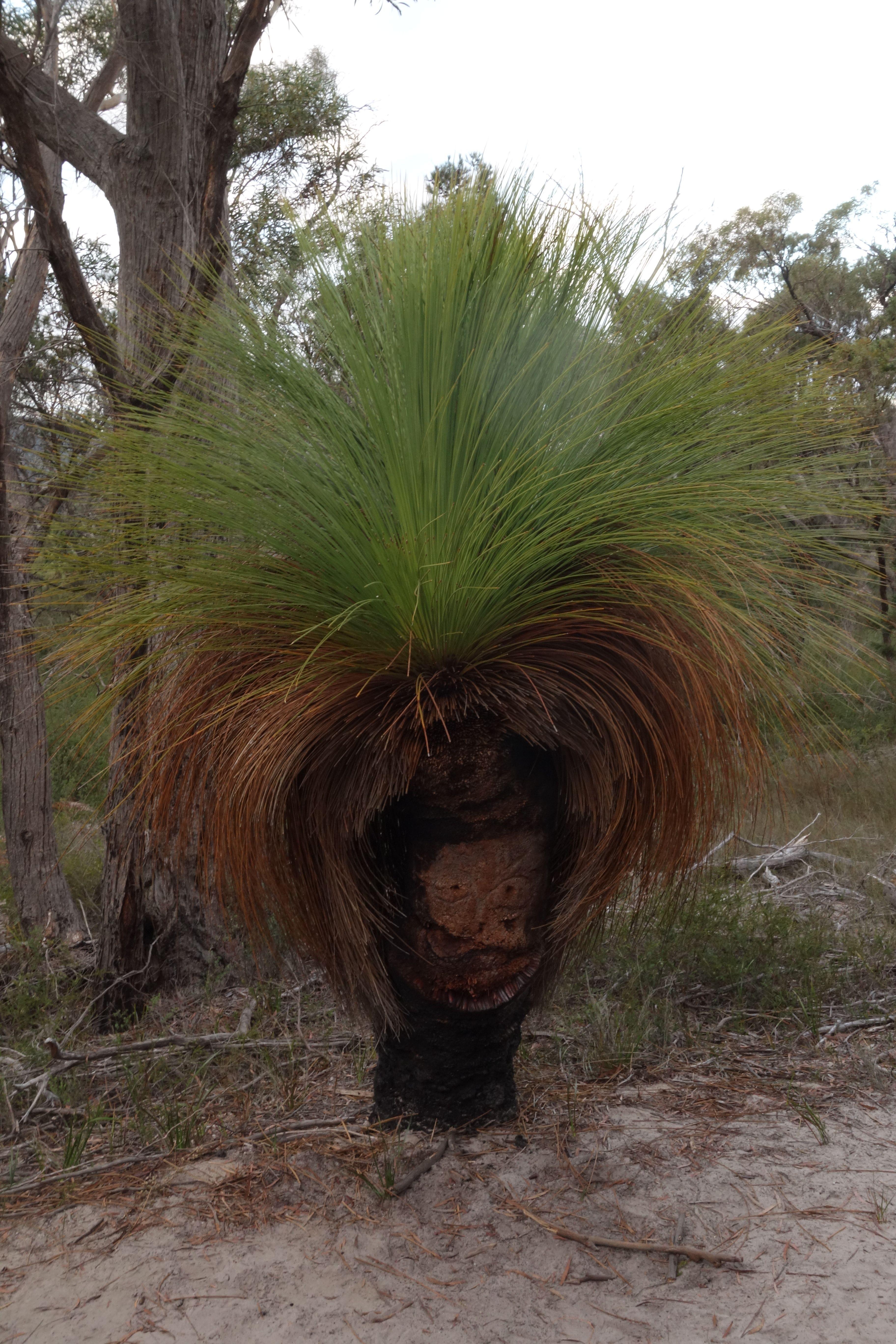 Australie-Tasmanie: Plante bizarre sur l'Ile quand meme.