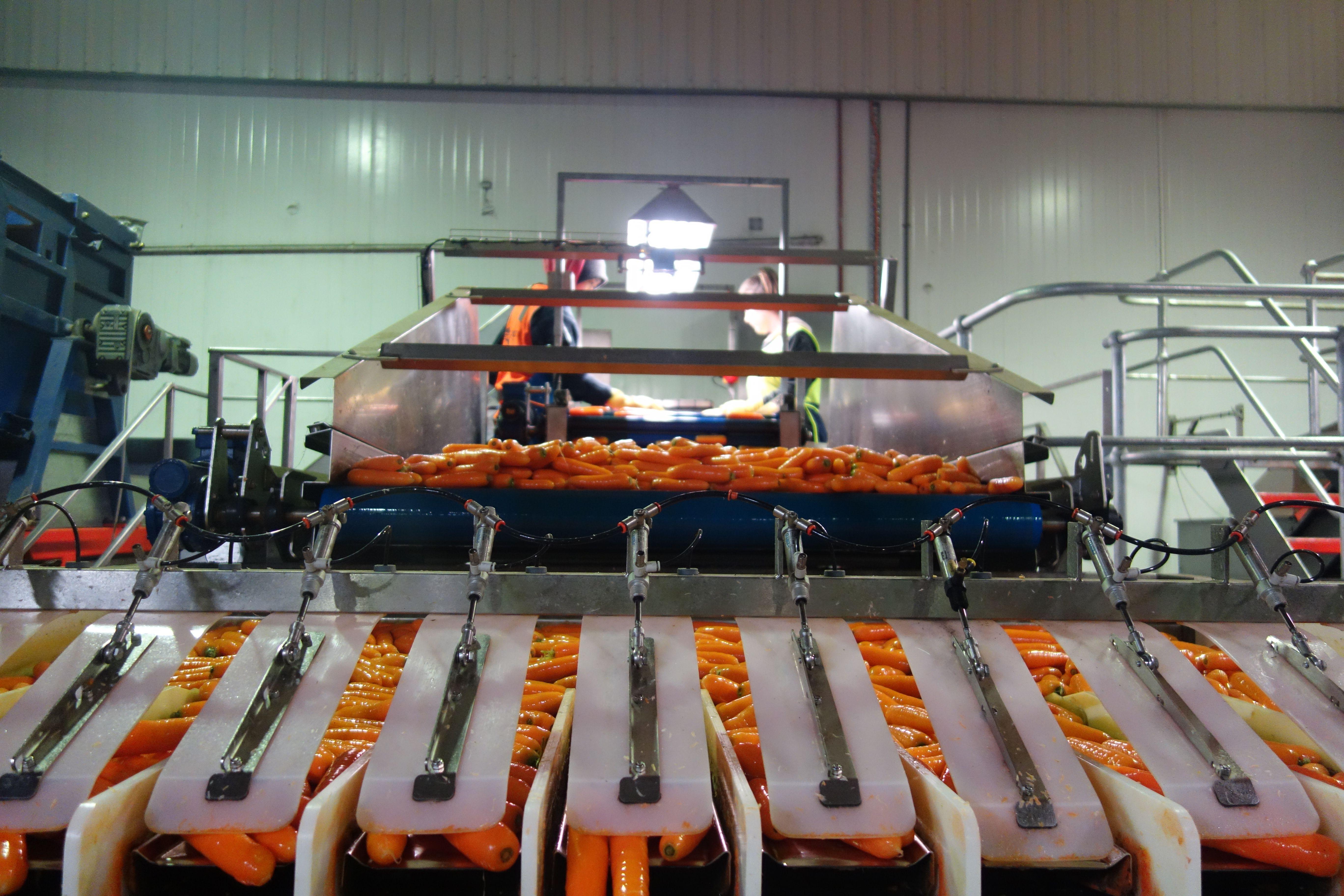 Australie- Tasmanie: Machine a carotte.