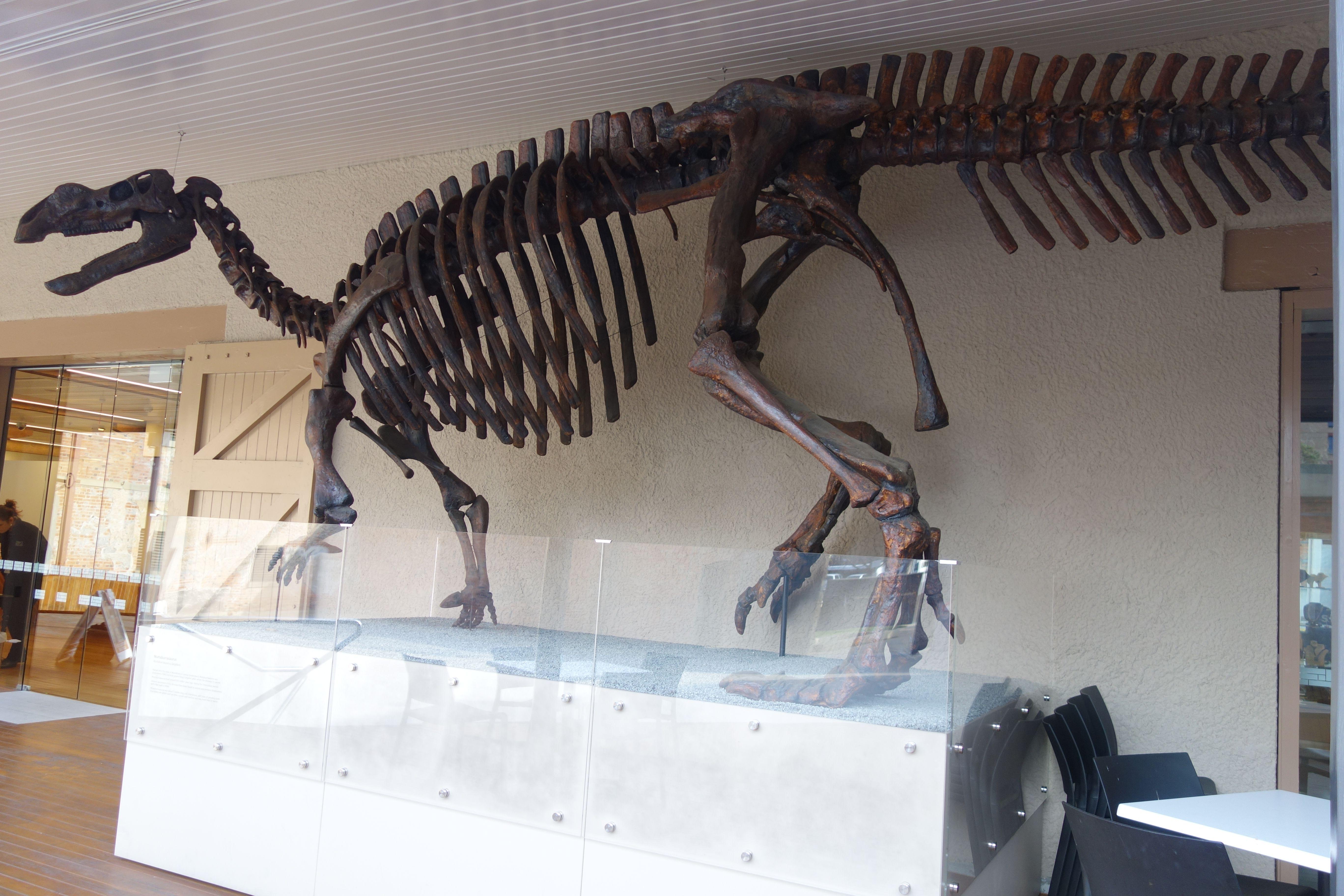 Australie- Tasmanie: L'un des musées du centre d'Hobart.
