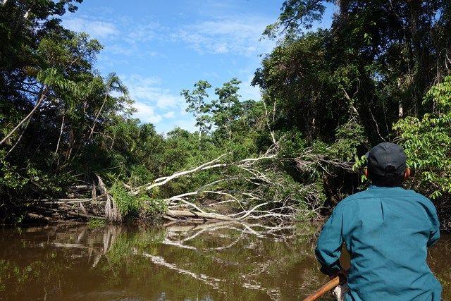 La reserve Pacaya Samiria se trouve au Perou sa superficie est de 20 800km2 et abrite plus de 40 000 ames à voir sur le blog https://yoytourdumonde.fr/voyage-perou-reserve-pacaya-samiria/