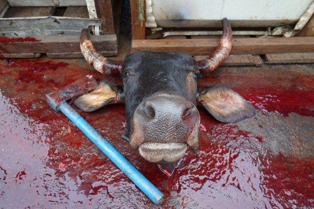 Voyage au Perou- Le bateau de la mort: Travail de boucher!