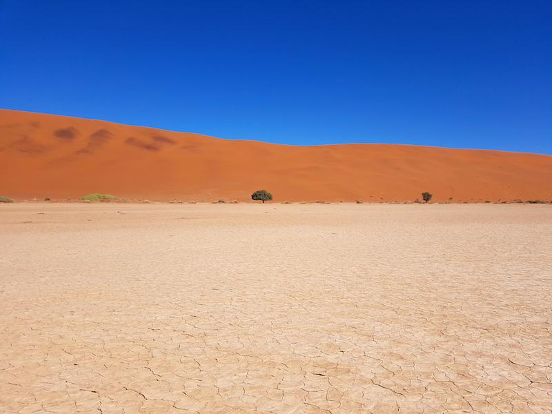 Arbre pétrifié, salarié blanc magnifique et dune rouge voici le programme de votre visite à Sossusvlei et Deadvlei photo blog voyage tour du monde travel https://yoytourdumonde.fr