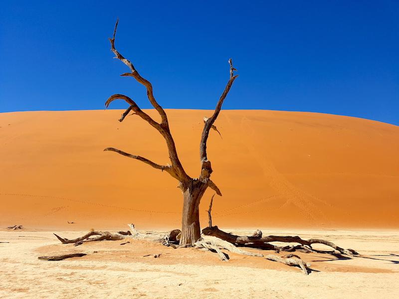 Arbre pétrifié à Deadvlei en Namibie près de Sossusvlei photo blog voyage tour du monde https://yoytourdumonde.fr