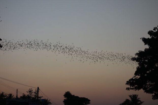 A 17h30 chaque soir des chauves souris quittent la grotte de Phnom Sampeau pour aller manger photo blog http://yoytroudumonde.fr