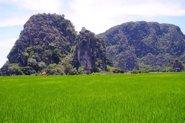 Magnifiques rizières sur la Baie d'Halong Terrestre photo blog tour du monde http://yoytourdumonde.fr