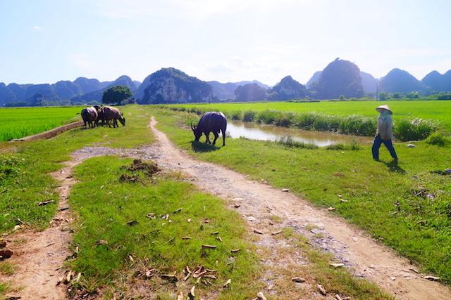 Ninh binh tac coc baie d'halong terrestre photo blog voyage tour du monde http://yoytourdumonde.fr