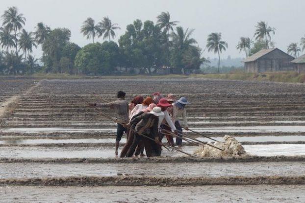 Habillé pour ne pas prendre le soleil, groupe de travailleurs dans les marais salants de Kampot au Cambodge. blog photo http://yoytoudumonde.fr