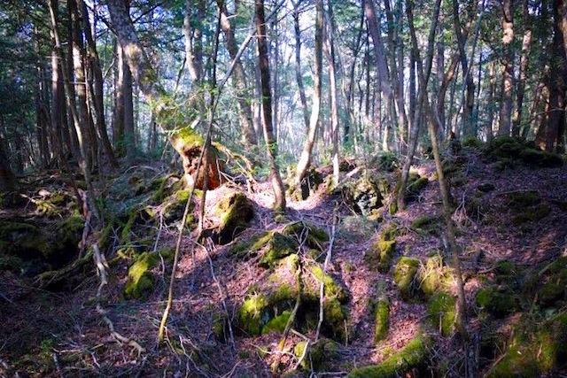 La foret hantée de Aokigahara ou de nombreux japonais viennent pour se...suicider! Photo blog voyage tour du monde http://yoytourdumonde.fr