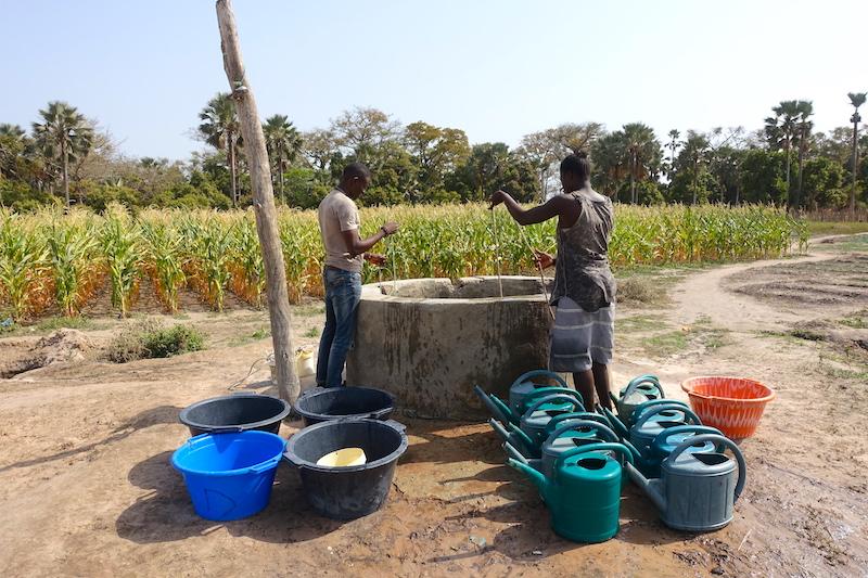 Jardin des femmes de Kamobeul au Sénégal en Casamance photo blog voyage tour du monde https://yoytourdumonde.fr