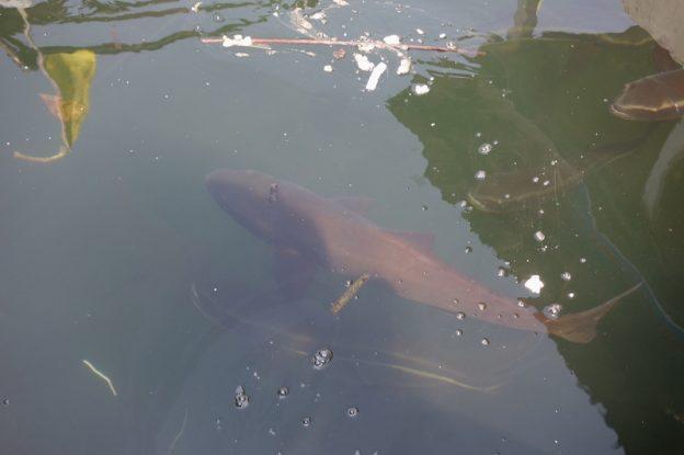 Baie d'hallong poisson vietnam photo blog voyage tour du monde https://yoytourdumonde.fr