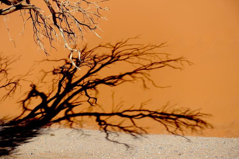 Les arbres étranges à la base de la Dune45 photo blog voyage tour du monde travel https://yoytourdumonde.fr