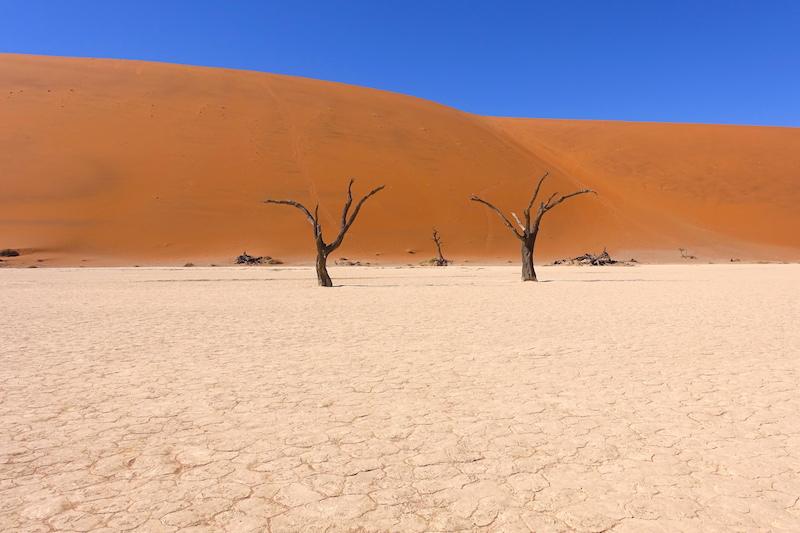 Salar de Deadvlei près de Sossusvlei avec arbres pétrifié photo voyage travel tour du monde https://yoytourdumonde.fr