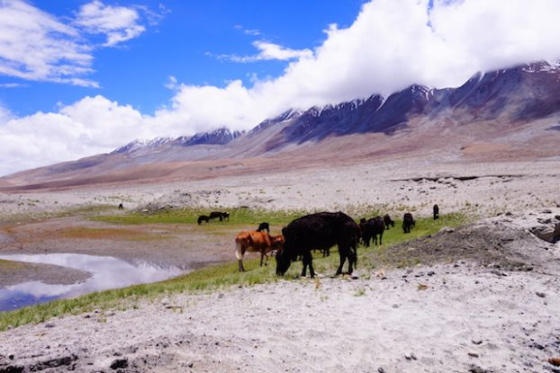 mal des montagnes ladakh photo blog voyage tour du monde https://yoytourdumonde.fr