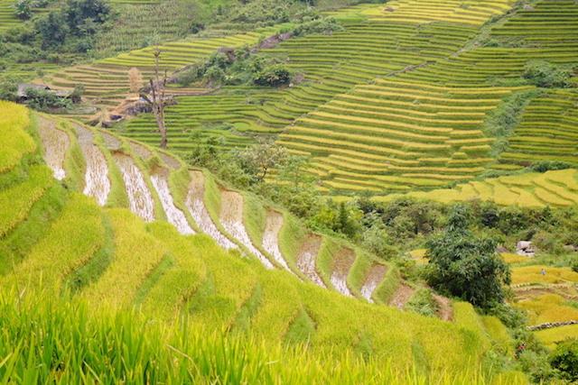 Vietnam Sapa terrasses rizières tour du monde photo blog http://yoytourdumonde.fr