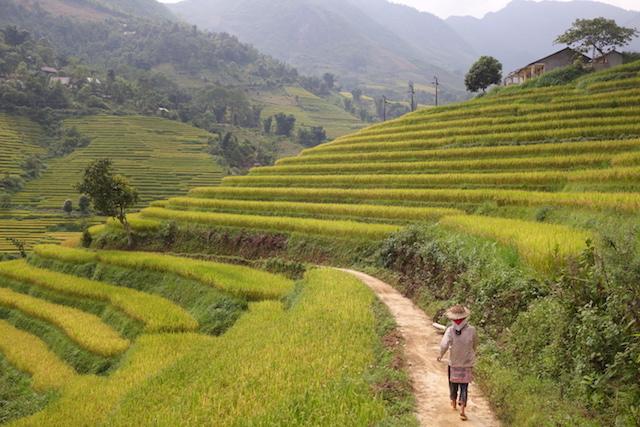 Vietnam sapa rizieres terrasse blog photo tour du monde http://yoytourdumonde.fr
