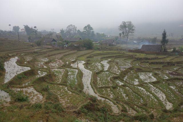 vietnam-sapa-terrasses-rizieres-riz-agriculture-minorite ethnique