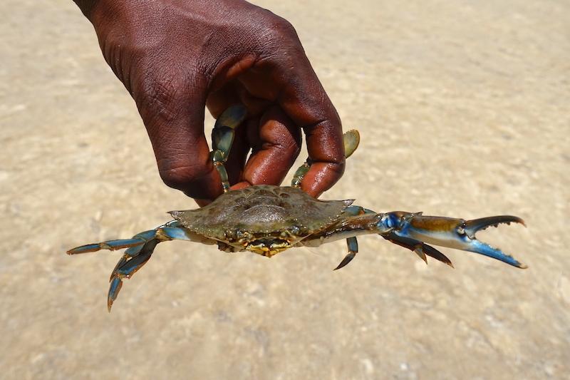 Peche aux crabes et aux poissons sur l'Ile des Féticheurs au Sénégal en Casamance photo blog voyage tour du monde https://yoytourdumonde.fr