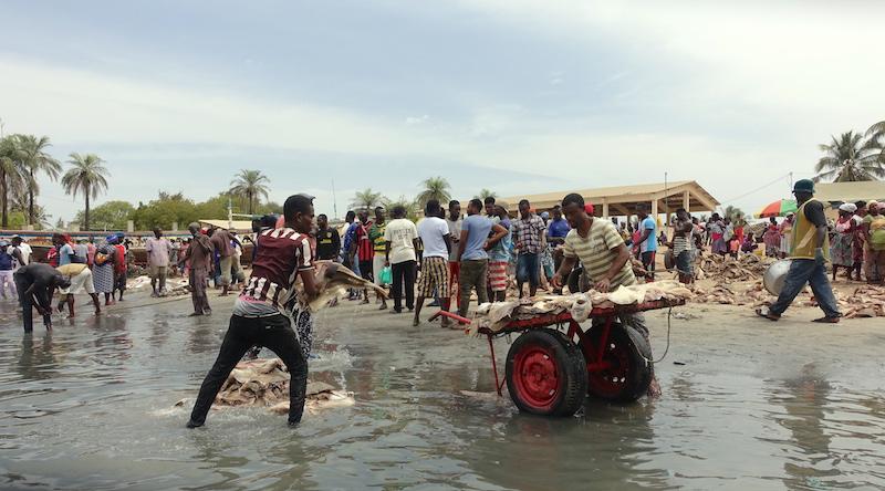 Sénégal: Elinkine le matin quand les pêcheurs déchargent les bateaux de poissons en casamance photo blog voyage tour du monde https://yoytourdumonde.fr