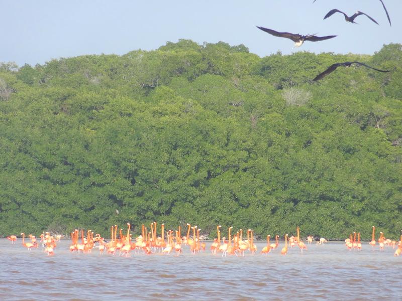 Dans la réserve de Celestun au Mexique avec les flamants roses photo blog voyage tour du monde travel https://yoytourdumonde.fr