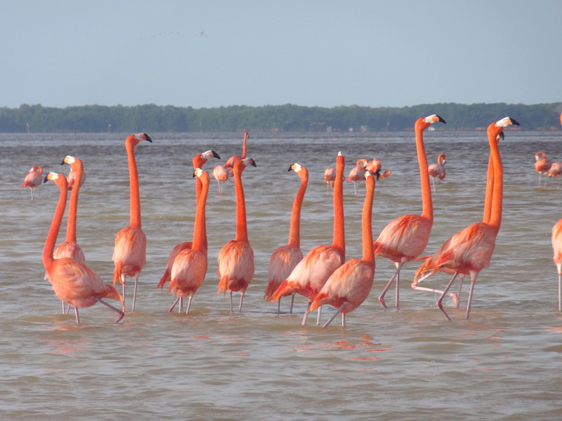 Celestun Flamant rose au Mexique photo blog voyage tour du monde travel https://yoytourdumonde.fr
