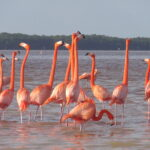 Les flamants rose de Celestun au Mexique photo blog voyage tour du monde travel https://yoytourdumonde.fr