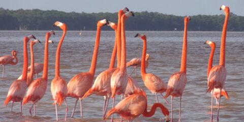 Les flamants rose de Celestun au Mexique photo blog voyage tour du monde travel https://yoytourdumonde.fr