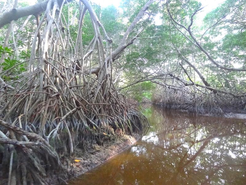 Zone protégée de Celestun dans le nord du Mexique photo blog voyage tour du monde https://yoytourdumonde.fr