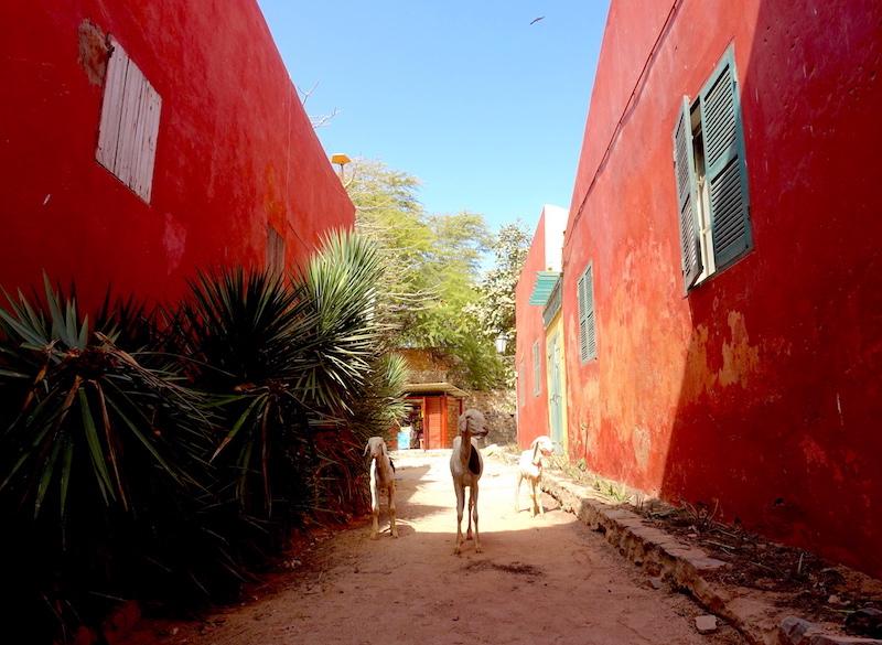 Drole de rencontre sur l'ile de Gorée au Sénégal photo blog voyage tour du monde https://yoytourdumonde.fr
