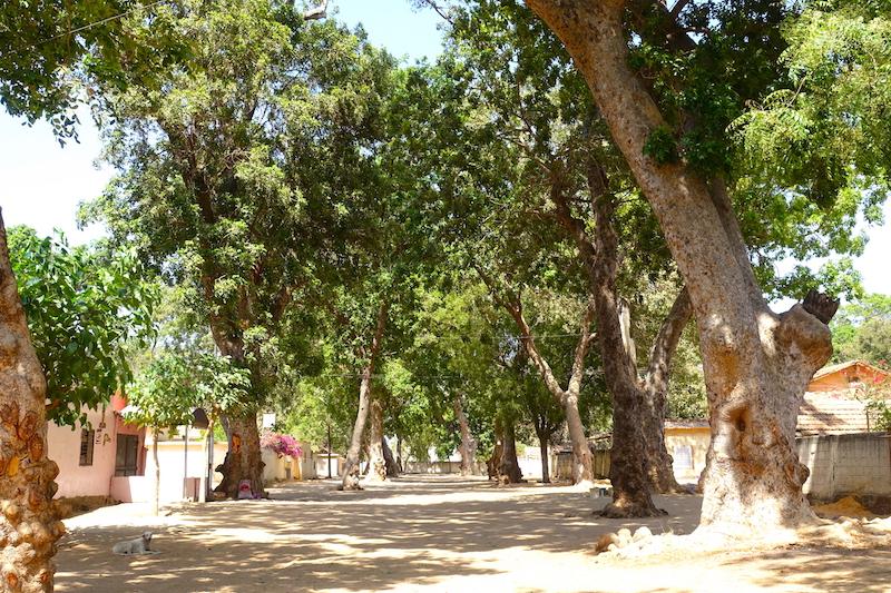 Il y a de très grandes allées arborées à Thiès au Sénégal photo blog voyage tour du monde https://yoytourdumonde.fr