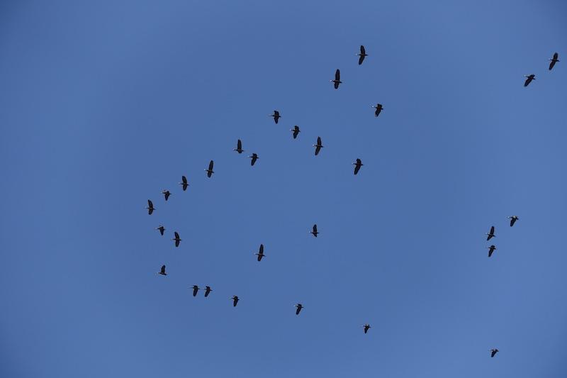 Observations d'oiseaux dans le ciel de Popenguine photo voyage tour du monde https://yoytourdumonde.fr