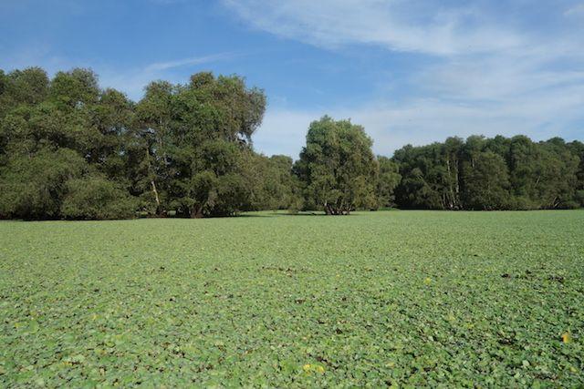 La mangrove de Chau Doc possede une reserve ornothologique magnifique pres du Delta du Mekong http://yoytourdumonde.fr