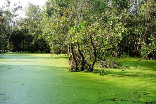 La mangrove de Chau Doc est la plus belle que j'ai vu durant mon tour du monde https://yoytourdumonde.fr