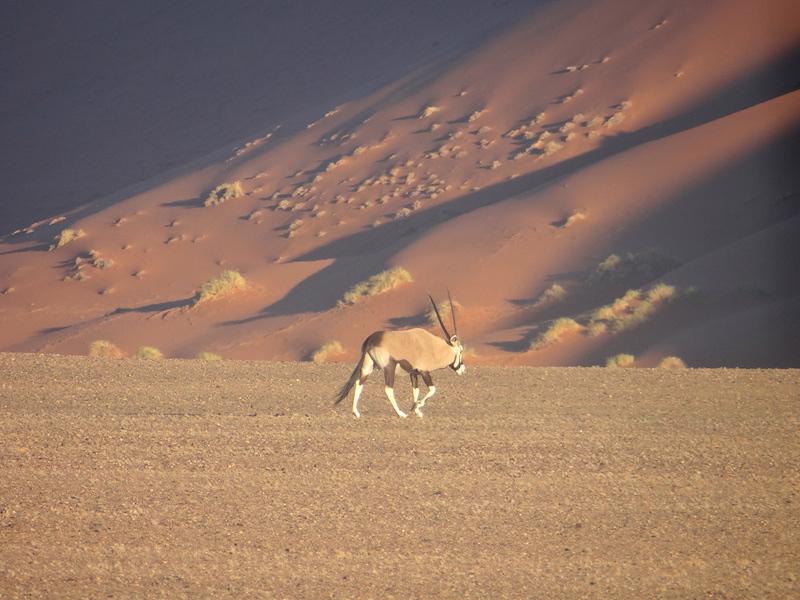 Oryx dans le désert Namib à Sossusvlei photo blog voyage tour du monde travel https://yoytourdumonde.fr