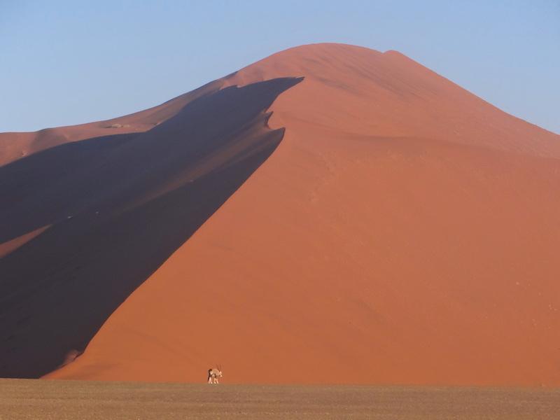 Désert de Namib-Naukluft avec une antilope du désert au fond photo blog voyage tour du monde travel https://yoytourdumonde.fr