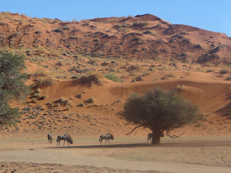 Elim Dune se trouve à 5m de Sesriem, vous pouvez y aller pour voir un superbe coucher du soleil dans le Namib Naukluft Parc en Namibie photo blog voyage tour du monde travel https://yoytourdumonde.fr
