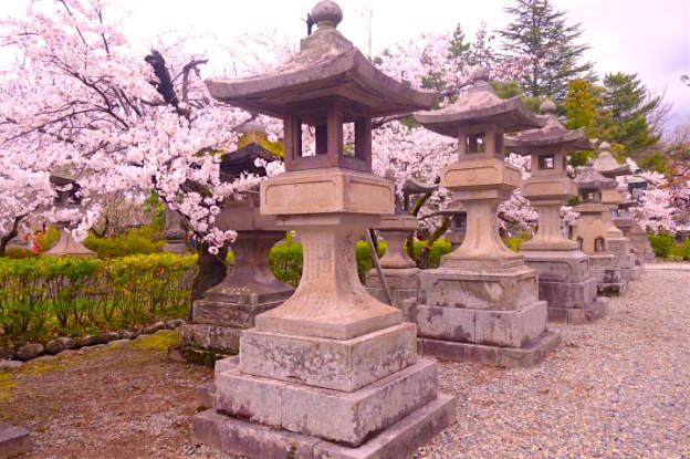 Floraison des cerisiers dans le temple Zenko-Ji à Nagano. Photo blog voyage tour du monde https://yoytourdumonde.fr